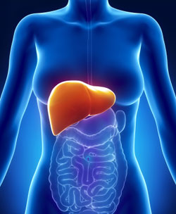 Your Liver Weight Loss
